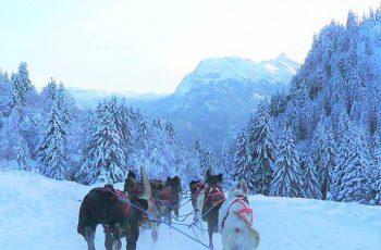 Vivez l'Aventure Polaire à Praz de lys Sommand - Activités chiens de traîneaux hiver 2019-2020