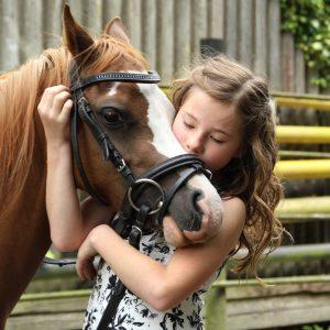 pony-2595144_1920