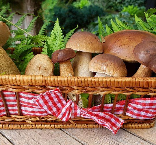 mushrooms-2678385_1920