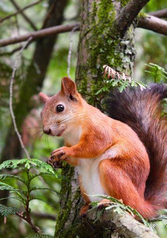 squirrel-1850210_1920